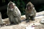 monkey around curug cimahi2
