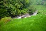 Sawah, Sungai dan Hutan