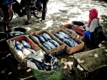 Tempat Pelelangan Ikan Santolo